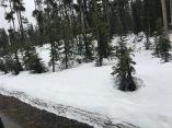 Yellowstone Parc